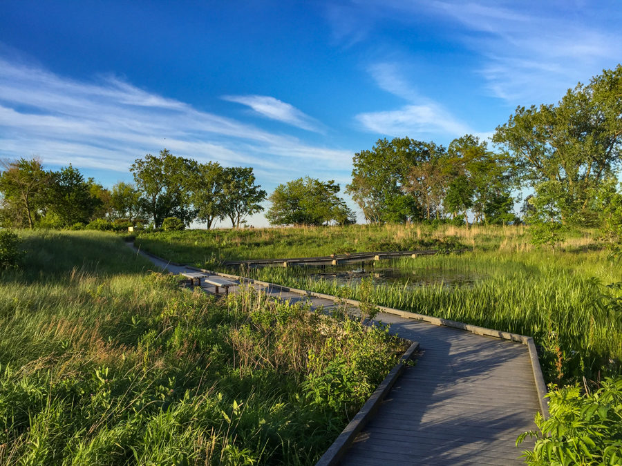 Boardwalk through the South Shore Nature Sanctuary [Eric Allix Rogers/Chicago Patterns]